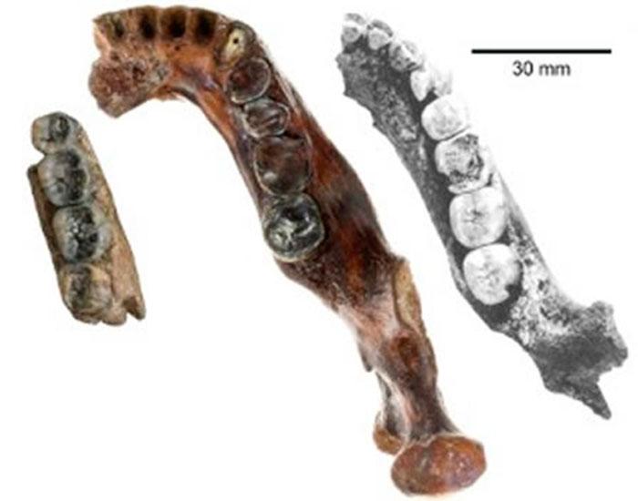 Un fósil hallado por un pescador puede revelar un nuevo tipo de homínido
