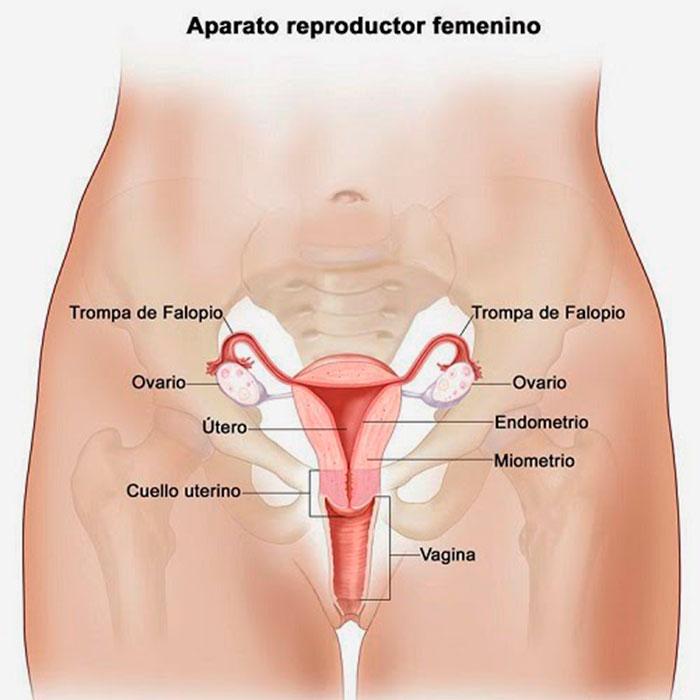 10 señales tempranas de cáncer de ovario que no debes ingnorar