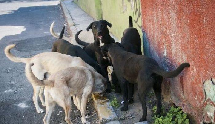 Perros devoran a anciana en San Luis Potosí