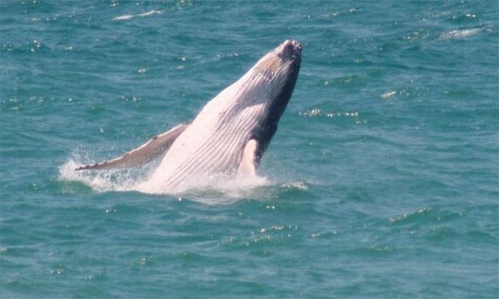 Ballena choca contra embarcación y mata a turista