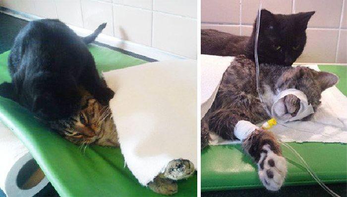 """El increíble gato """"enfermero"""" que cuida a otros animales en una veterinaria"""