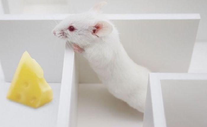Científicos dan habilidades psíquicas a ratas (próximamente humanos con poderes de percepción)