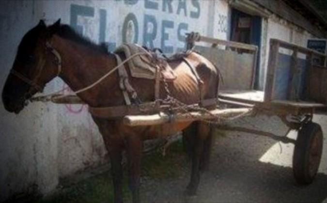 Fiel caballo llevó a su amo muerto hasta la puerta de su casa