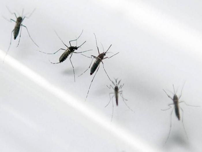 Todo lo que debes saber sobre el Zika