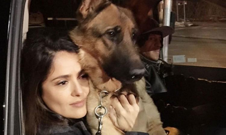 Mata vecino de Salma Hayek a su mascota