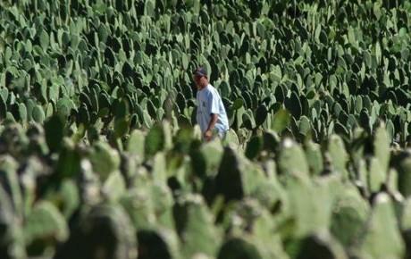 'El rancho del loco' nopalero que 'siembra' biogás