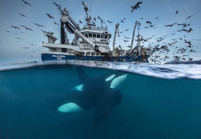 Finalistas del Wildlife Photographer 2016…NO TE LAS PUEDES PERDER