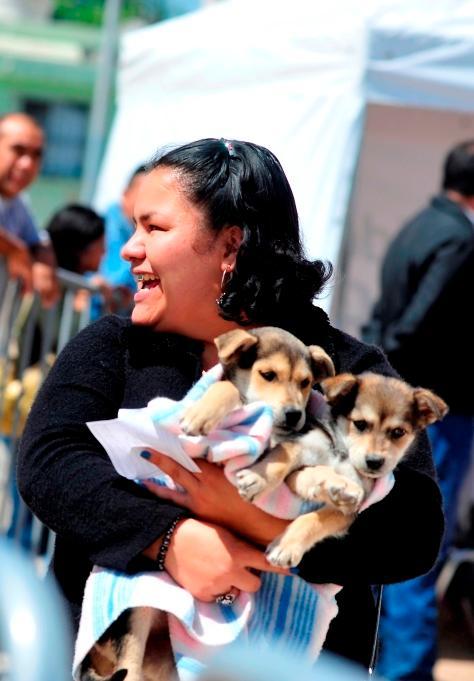 Ya hay alrededor de 600 mascotas en el padrón de dueños responsables
