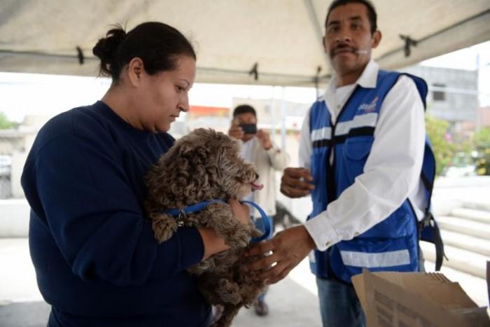 Vacunarán a mascotas en la Miguel Hidalgo