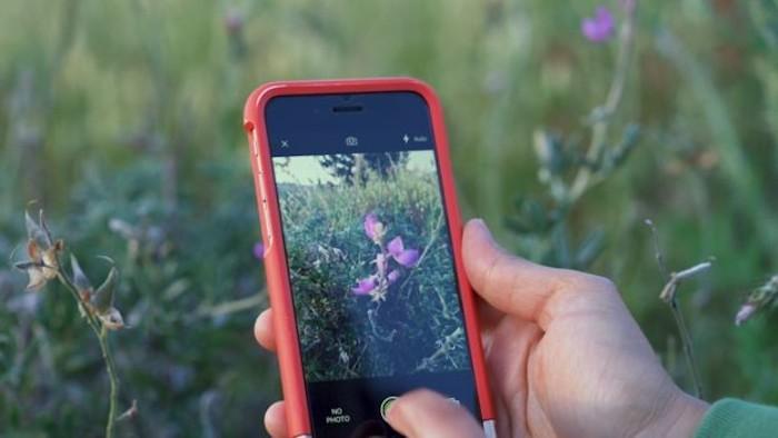 Esta app te permite reconocer cualquier especie silvestre