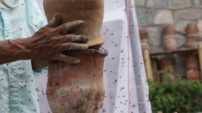 Cuetzalan, la dulce vida de la abeja de los mayas