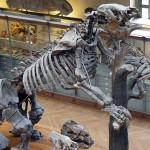 Esqueleto-perezoso-gigante