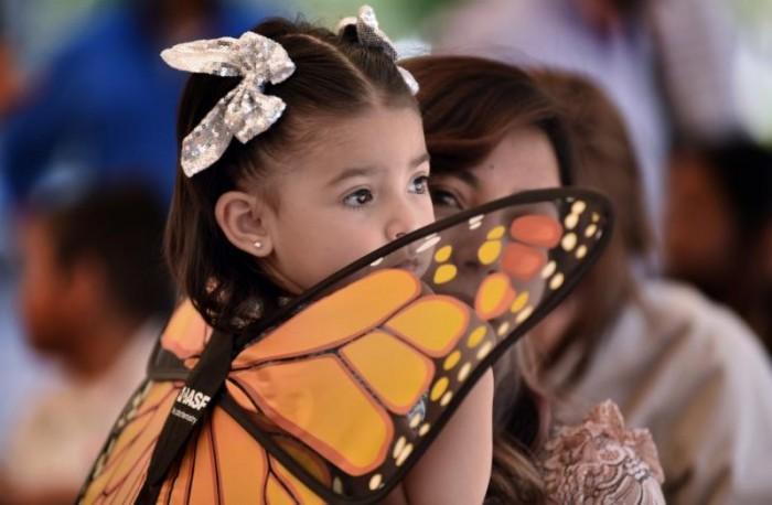 Realizarán 1er foro para conservación de la monarca