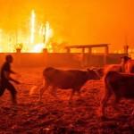 EPA145  CONDEIXA  PORTUGAL   16 10 2017 - Hombres ponen a salvo el ganado durante un incendio forestal declarado en Vieira de Leiria en Marinha Grande  Portugal  hoy  16 de octubre de 2017  Las autoridades portuguesas elevaron a seis las personas muertas y mantuvieron en 25 el numero de heridos en los incendios que afectan al centro y norte del pais  donde hoy tratan de controlar las llamas mas de 4 500 bomberos  EFE  Ricardo Graca