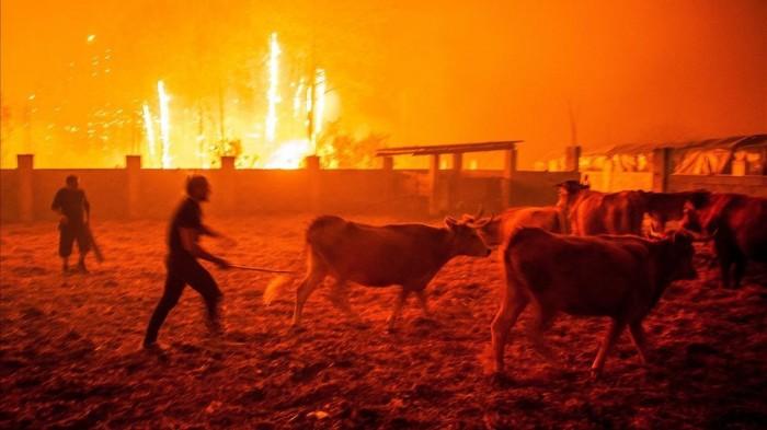 Duelo nacional en Portugal por muertos en incendios forestales