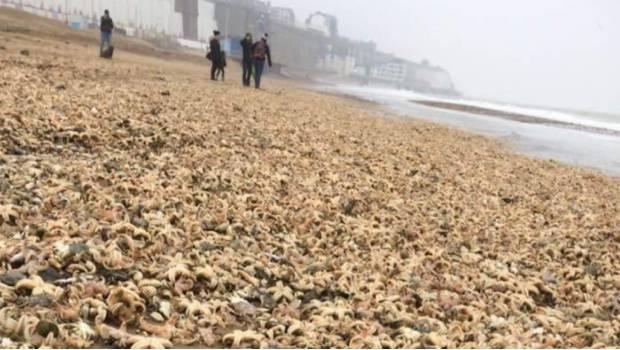 Aparecen miles de estrellas de mar muertas sobre una playa
