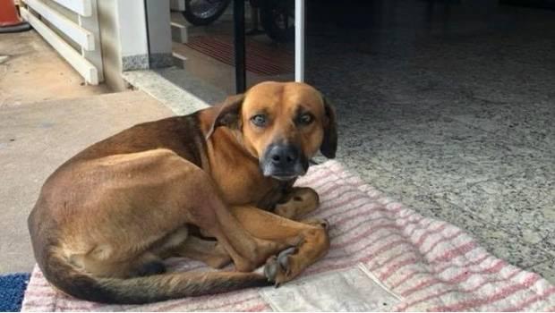 Perro ha esperado por 4 meses a su amo fallecido