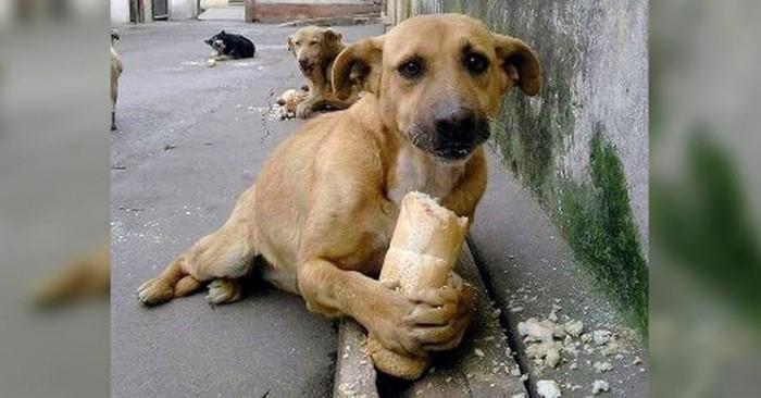 Establecen multas para quien alimente a perros callejeros
