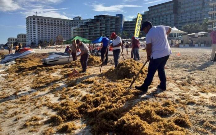 Toneladas de sargazo arriban a costas del sureste mexicano