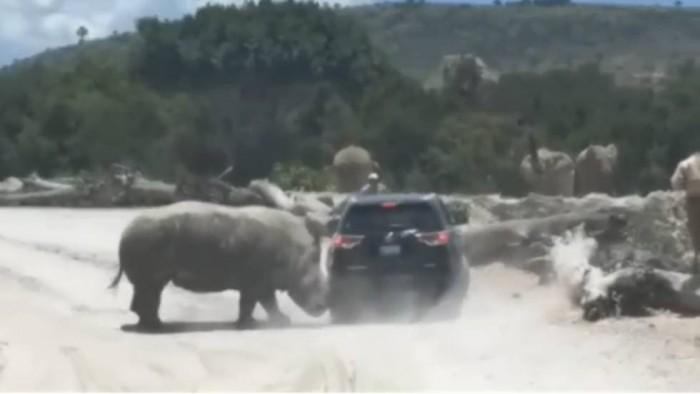 Un rinoceronte embiste el vehículo de una familia en un safari