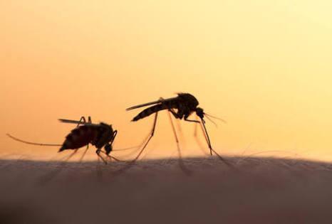 ¿A quienes eligen los mosquitos?