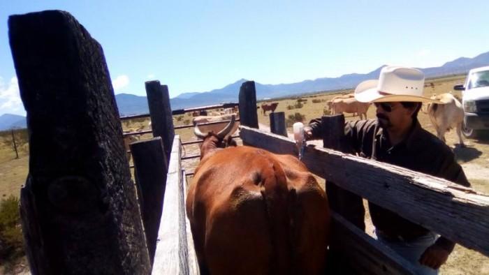 Dirige Gobierno Municipal programa de Sanidad Animal en ejidos