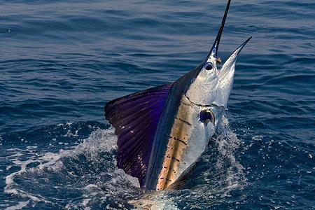 De pesca en Colima