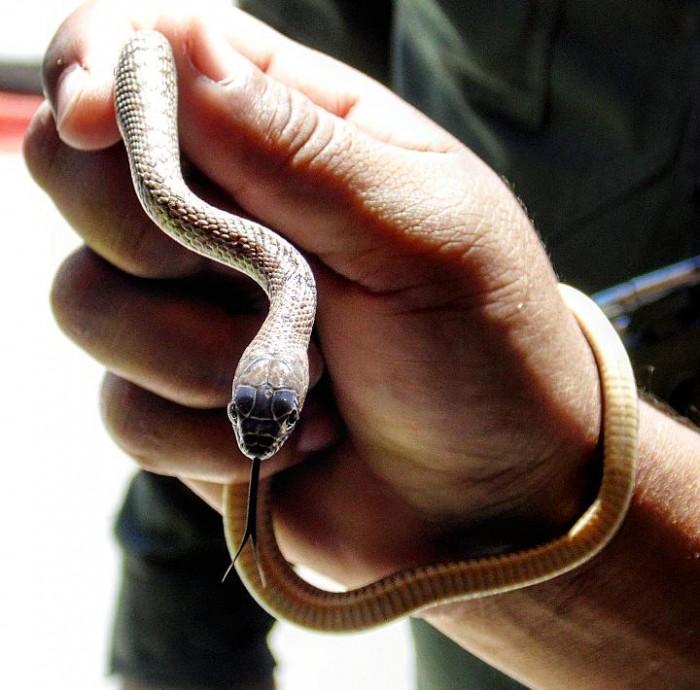 Reubica Policía Ambiental animales silvestres
