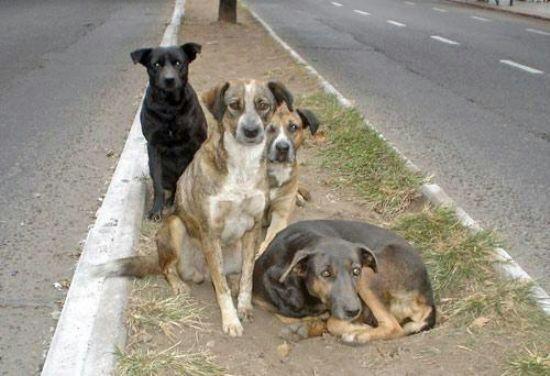 Argentina aprueba ley que permite matar perros que viven en la calle
