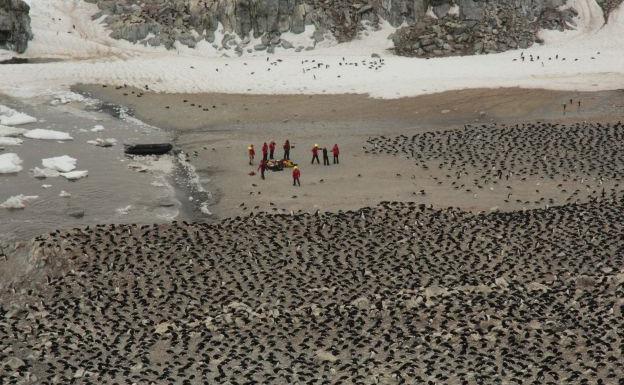 La mayor colonia de pingüinos adelaida tiene 3.000 años y está mermando por el cambio climático