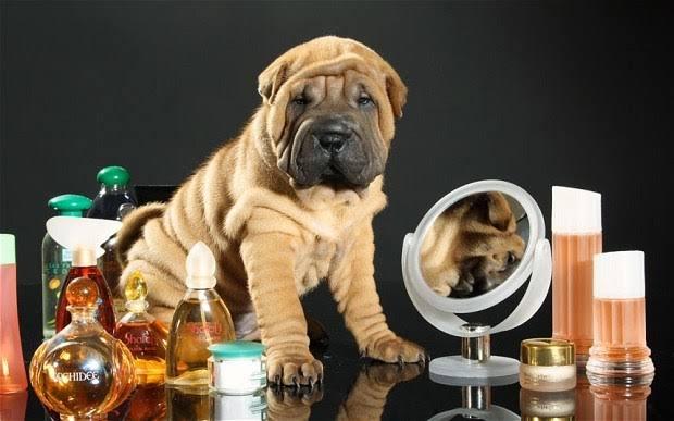 Perfume para Perro de Aceite Mineral.