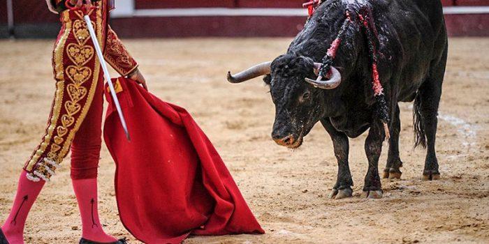 Prohíben corridas de toros y peleas de gallos en Quintana Roo