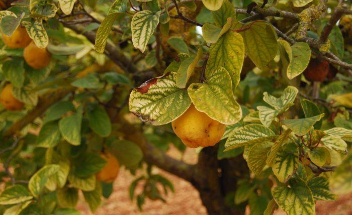 Las plantas olvidadas, leyendas y recetas curiosas