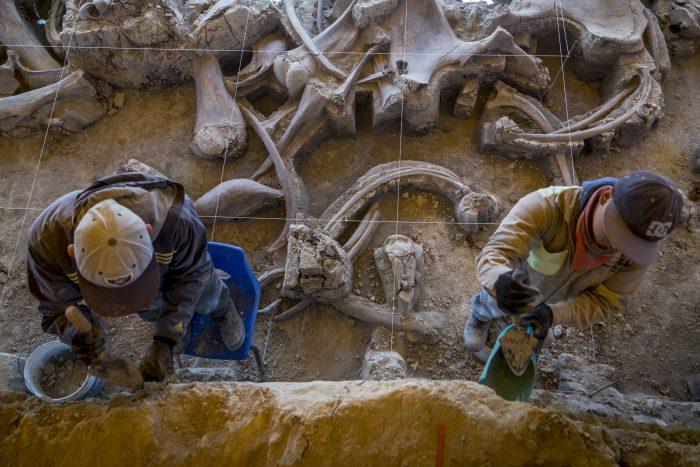 México no sabe qué hacer con sus mamuts