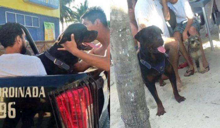 Perro muerde a niño de 6 años en playa de Yucatán; le destroza la cara