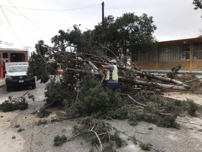 Atiende Gobierno Municipal reportes por fuertes vientos