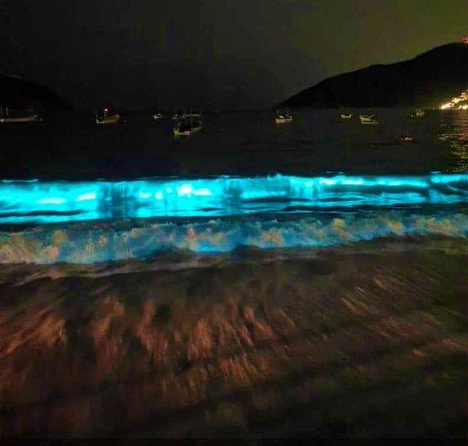 Sin turistas, playa de Puerto Marqués se llena de bioluminiscencia