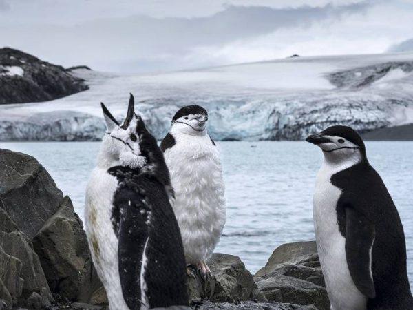 Misión en la Antártida: salvar la Tierra