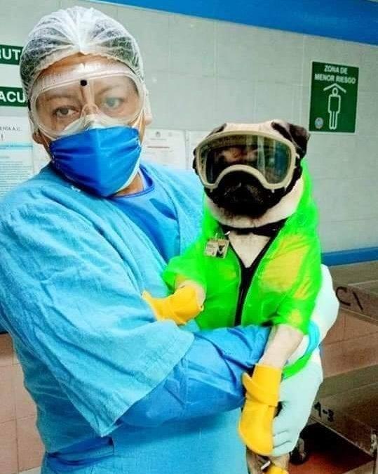 """""""Harley El Tuerto"""" llega al centro médico 20 de noviembre del ISSSTE"""