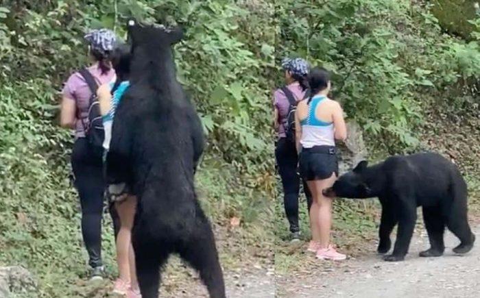Anuncian operativo para capturar al oso de Chipinque; lo enviarán a un zoológico