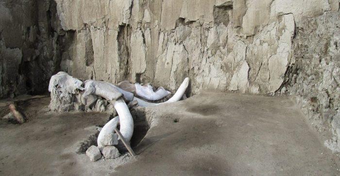 Cerca de 200 mamuts han encontrado en Santa Lucía