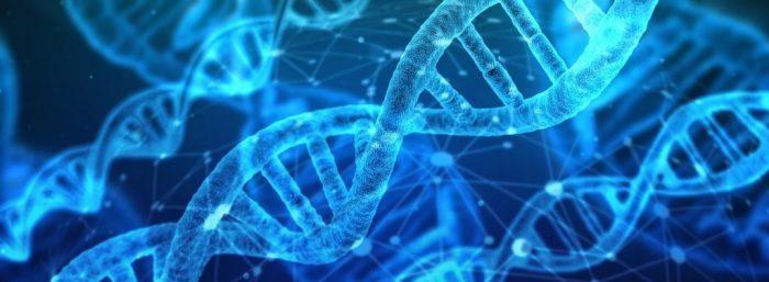 Descubren nuevos genes vinculados al autismo y otros trastornos neurológicos