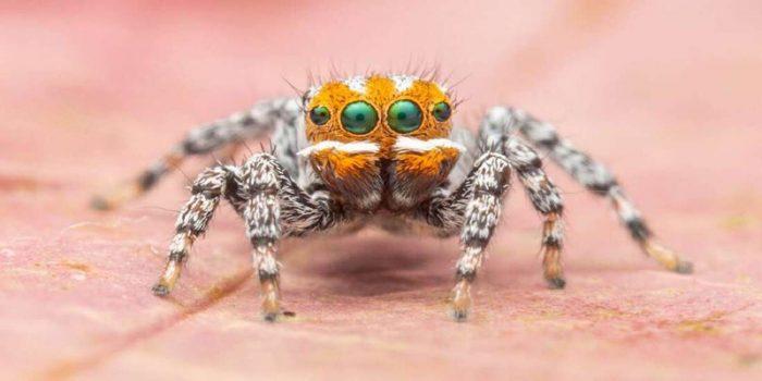 """""""Buscando a Nemo """"  la araña recién descubierta en Australia"""