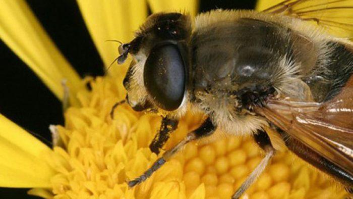 El veneno de abeja podría ayudar a tratar el cáncer de mama: estudio