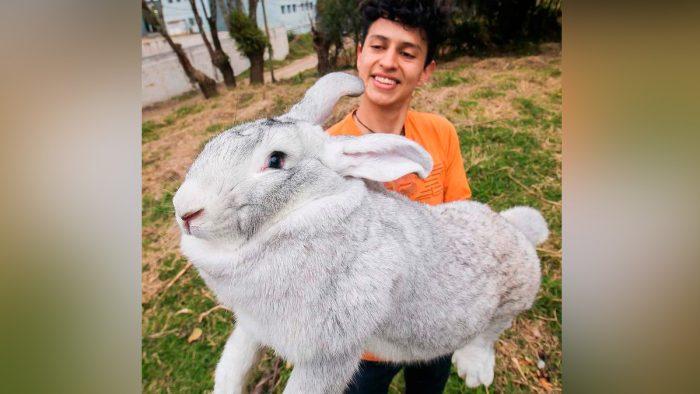 Los conejos más grandes del mundo están en Puebla
