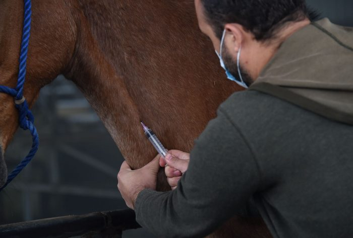 Con suero de caballos, Birmex alista la producción de un tratamiento contra el COVID-19
