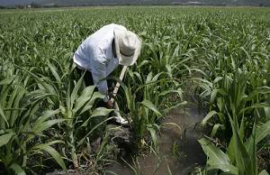 Apoya Tamaulipas a jornaleros agrícolas para trabajar en el extranjero