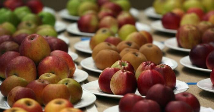 En calor sugieren descartar alimentos hipercalóricos