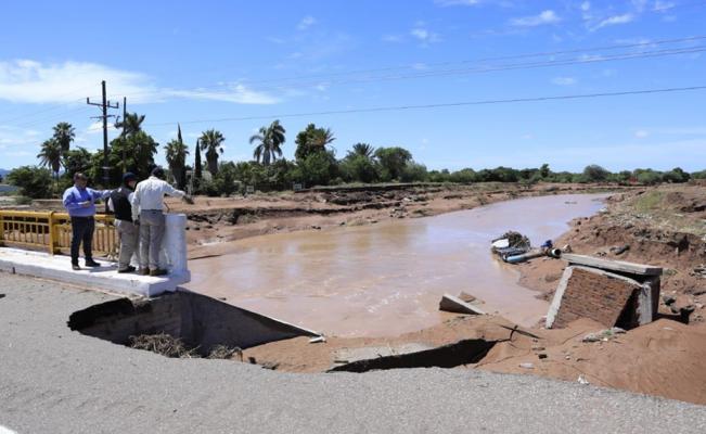 Lluvias en Sinaloa matan a más de medio millón de animales y dejan pérdidas por 800 mdp