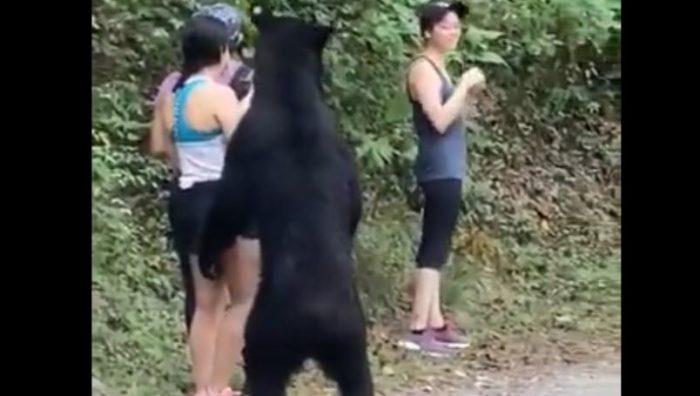 Profepa liberará a oso de Chipinque en sierra de NL